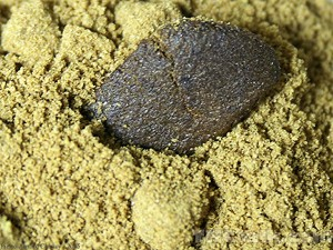 Ketama-ResinPowder-Hashish (1)