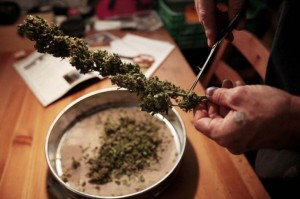 legalizzazione-marijuana-4-770x513-1