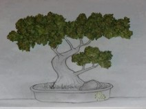 bonsai-tree-sketch-marijuana-buds-600x450