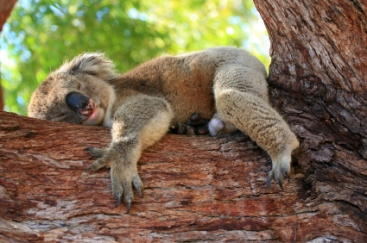Australien_07_ 0150